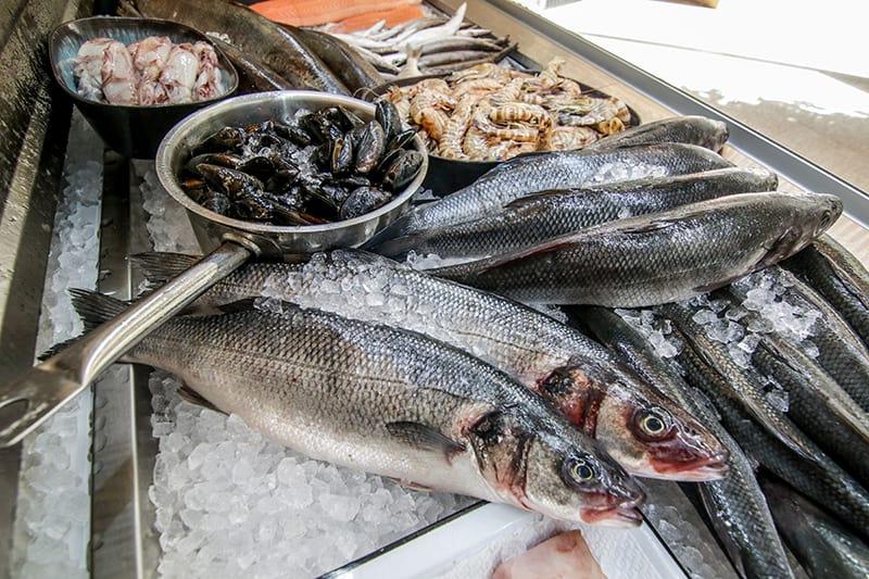 דגים בשנקין